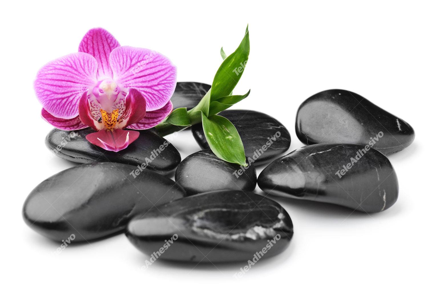 Wall Murals: Orchid with stones