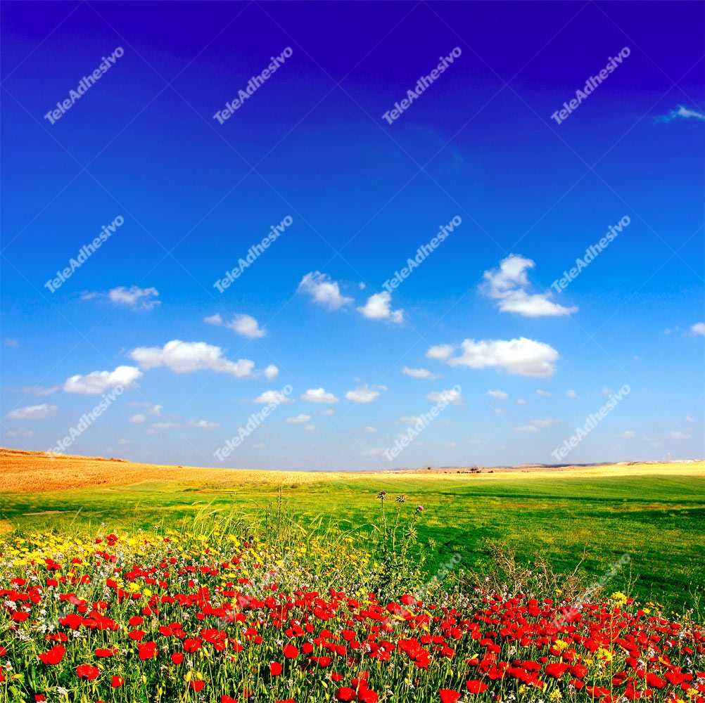 Wall Murals: Field of poppies