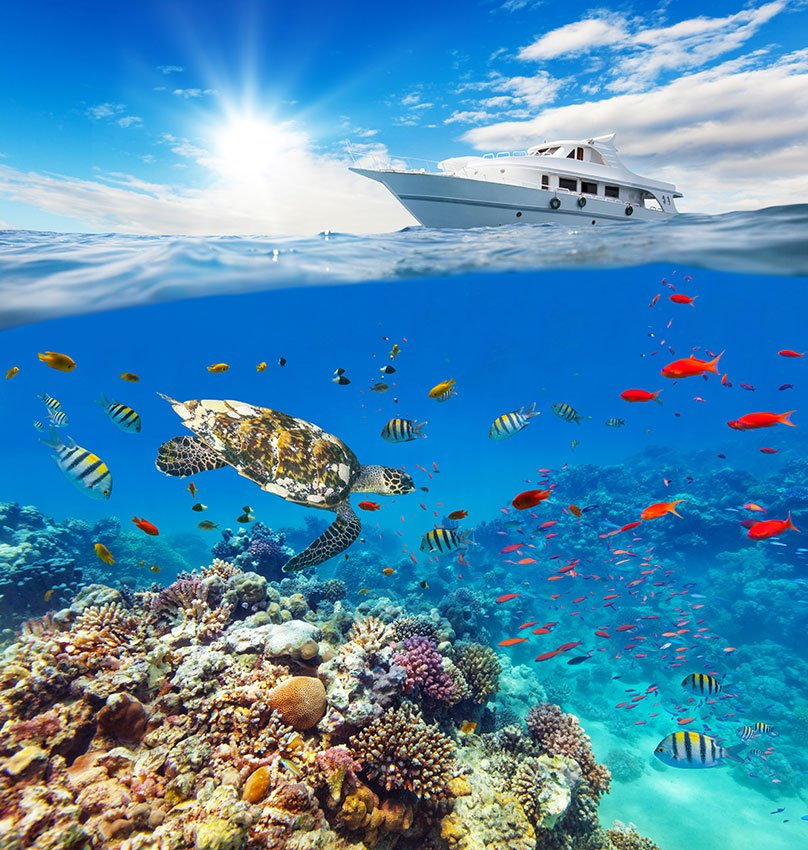 Wall Murals: Yacht sailing on corals
