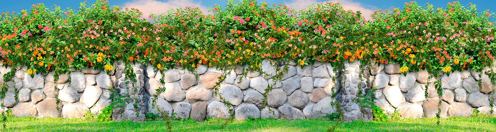 Wall Murals: Wall of flowers