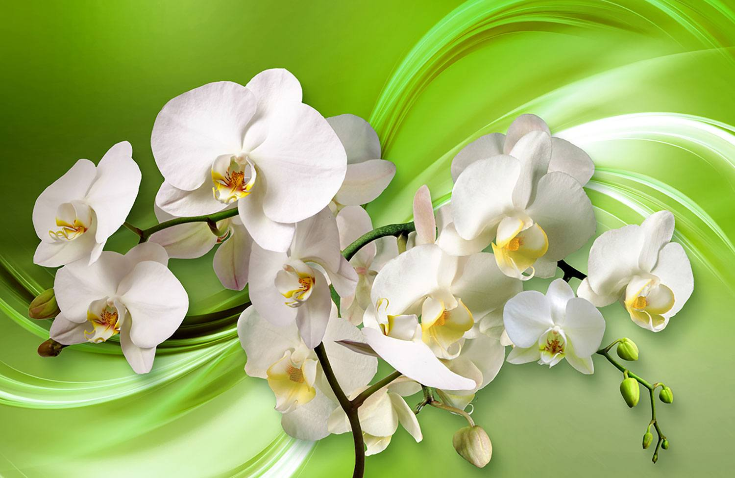 Wall Murals: Orchids on green