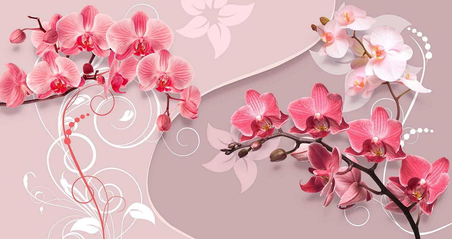Wall Murals: Yin and Yang Orchids